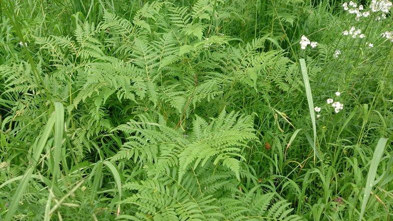 Растительность на Ульбе