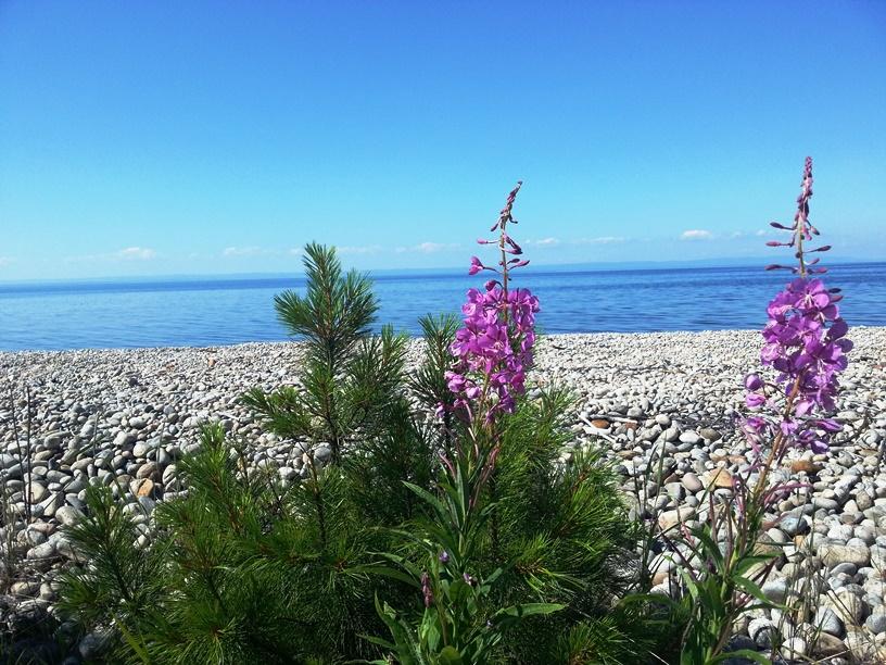 растительность Байкала